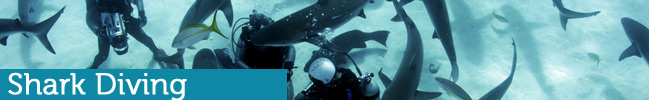 Roatan Shark Diving